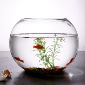 鱼之家 宠物水族 透明圆鱼缸 球型玻璃鱼 20cm腰径 送彩石+渔捞 19.9元包邮