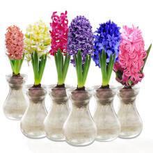 14日20点:玖枝苑 风信子种球 玻璃瓶水培植物套装办公室内桌面花卉盆栽绿植 蓝星 玻璃瓶套装 9.8元