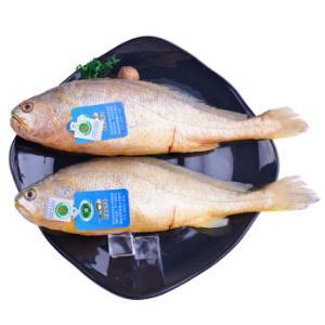 三都港冷冻三去无公害黄花鱼大黄鱼700g2条袋装海鲜水产*5件 179.6元(合35.92元/件)