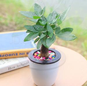 萌肉居办公桌绿植发财树    6.8元