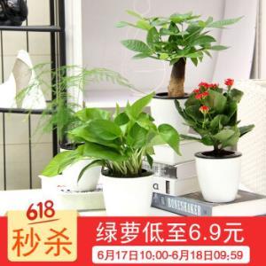 绿植盆栽绿萝6.9元(需凑单) 6.9元