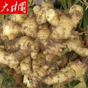 大井冈新鲜小黄姜2斤 16.9元(需用券)