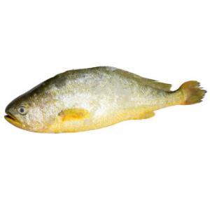 京东PLUS会员:鲜多邦新鲜冷冻大黄鱼500g*3件 83元(合27.67元/件)