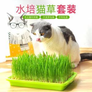 TOMCAT派可为水培猫草种子种植套装 16.8元