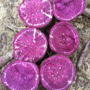 新鲜现挖农家自种番薯包邮5斤沙地小紫薯板栗山芋蜜薯地瓜13.8元(需用券)
