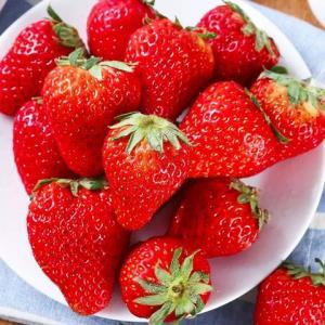 砀宁果品大凉山红颜草莓5斤 61.9元