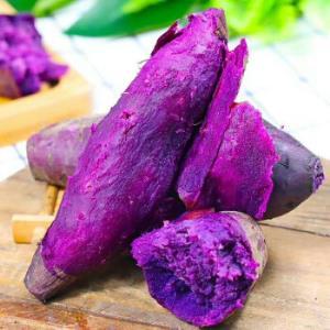 移动端:新鲜小紫薯10斤番薯迷你小地瓜广西巴马紫薯农家现挖现发巴马巨大紫薯带箱十斤 19.9元