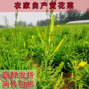 移动端:新鲜黄花菜现摘农家自产孕妇金针菜萱草凉拌菜新鲜蔬菜500g 15.8元