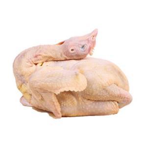 莘鲜农庄三黄鸡冷冻新鲜农家散养土鸡肉现杀速冻整只白条童子鸡49元