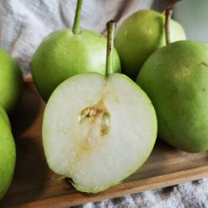 移动端:2020年新鲜陕西早酥梨4.5-5斤约16个新鲜水果梨子现摘现发早酥梨五斤 12.8元