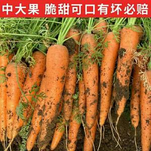 移动端:胡萝卜黄皮黄心萝卜蔬菜带泥沙地水果胡萝 14.8元