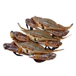 鲜活冷冻梭子蟹净重3.2-3.8斤 109.9元(需用券)