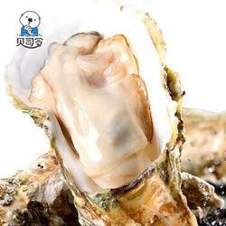 贝司令乳山生蚝海蛎子鲜活新鲜牡蛎3XL号10斤装约24-28个海鲜水产烧烤食材*2件