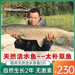 天然活水大草鱼5斤新鲜现捕现杀水煮活鱼酸菜鱼片食材净膛淡水鱼 230元