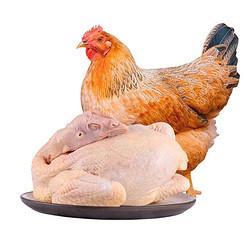 温润黄羽三黄鸡800g农家土鸡散养走地鸡整只鸡慢养110天以上红烧白切煲汤食材*7件 134.24元(需用券,合19.18元/件)