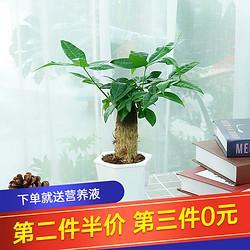 种着玩花卉绿植盆栽室内植物吊兰发财树绿萝栀子花带储水盆栽好发财树菱形盆6.07元(需买7件,共42.5元)