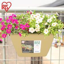 IRIS 爱丽思 长方形塑料吊挂花盆18.5元包邮