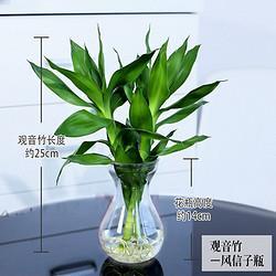 泰西丝办公室水培绿植花卉盆栽文竹绿萝吊兰发财树5.9元(需用券)